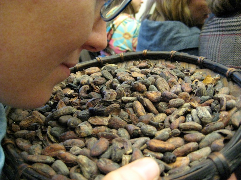 Pre-roasted cacao beans