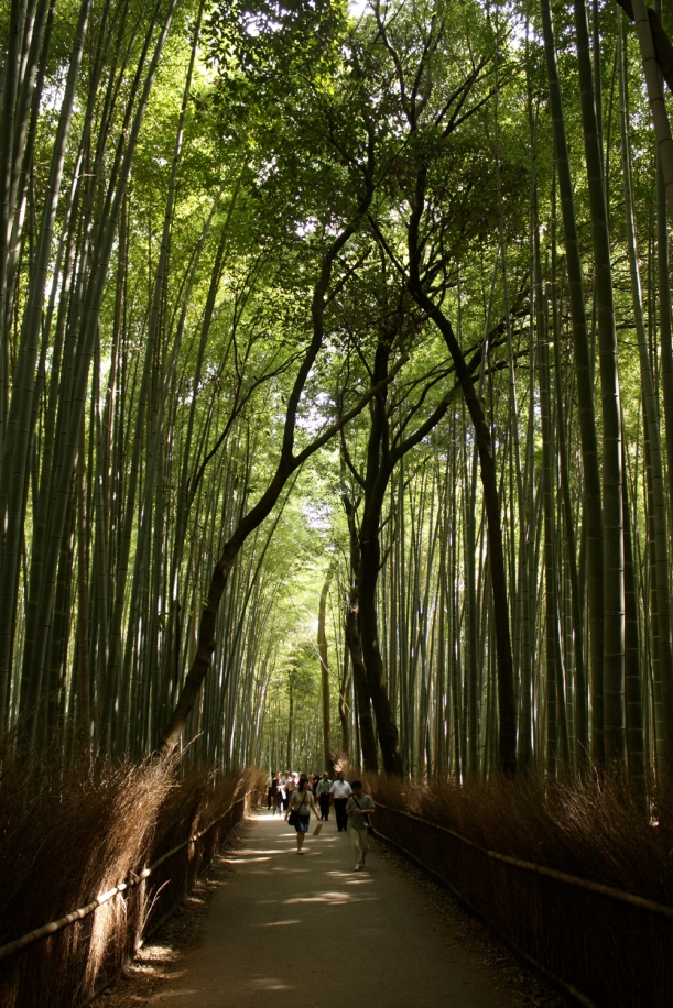 The bamboo forest at Tenryu-ji